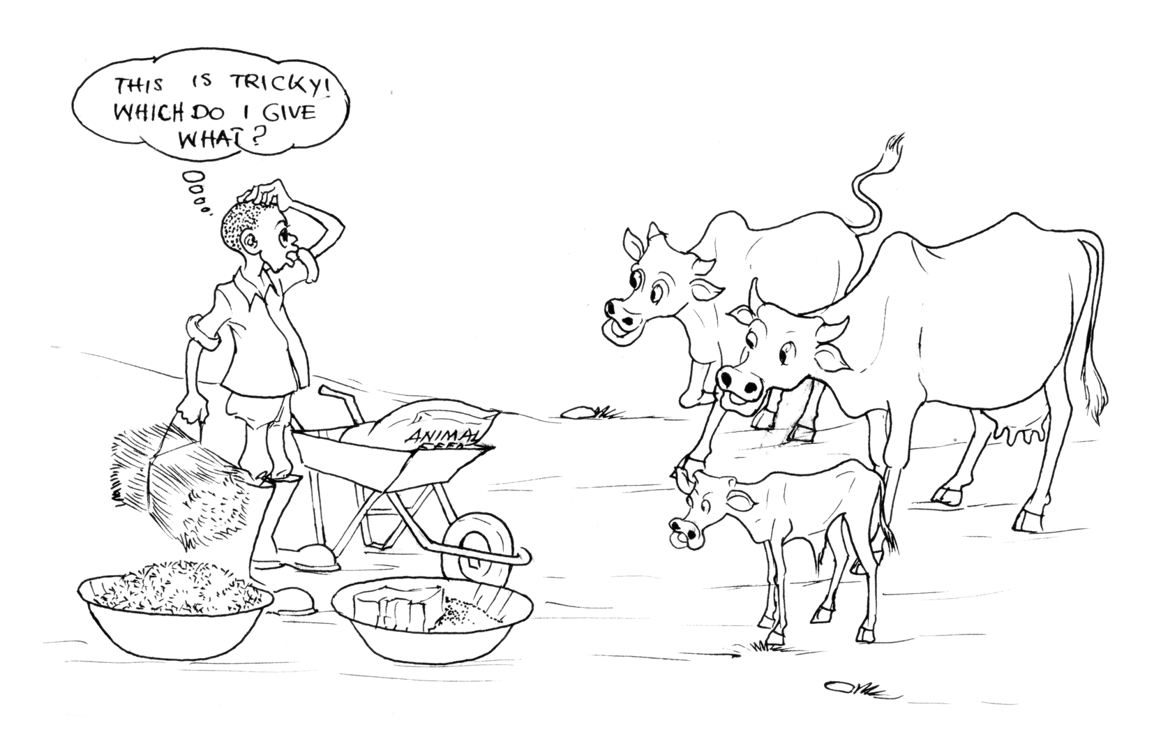 traditional_cattle_feed