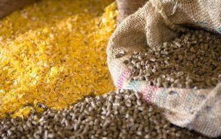 Animal Feed Raw Materials