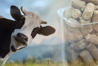 Cattle Feed Pellet